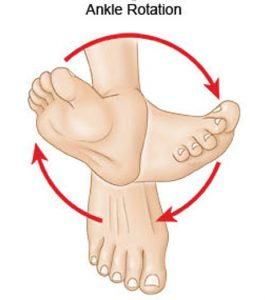 Rotation of the ankle joint